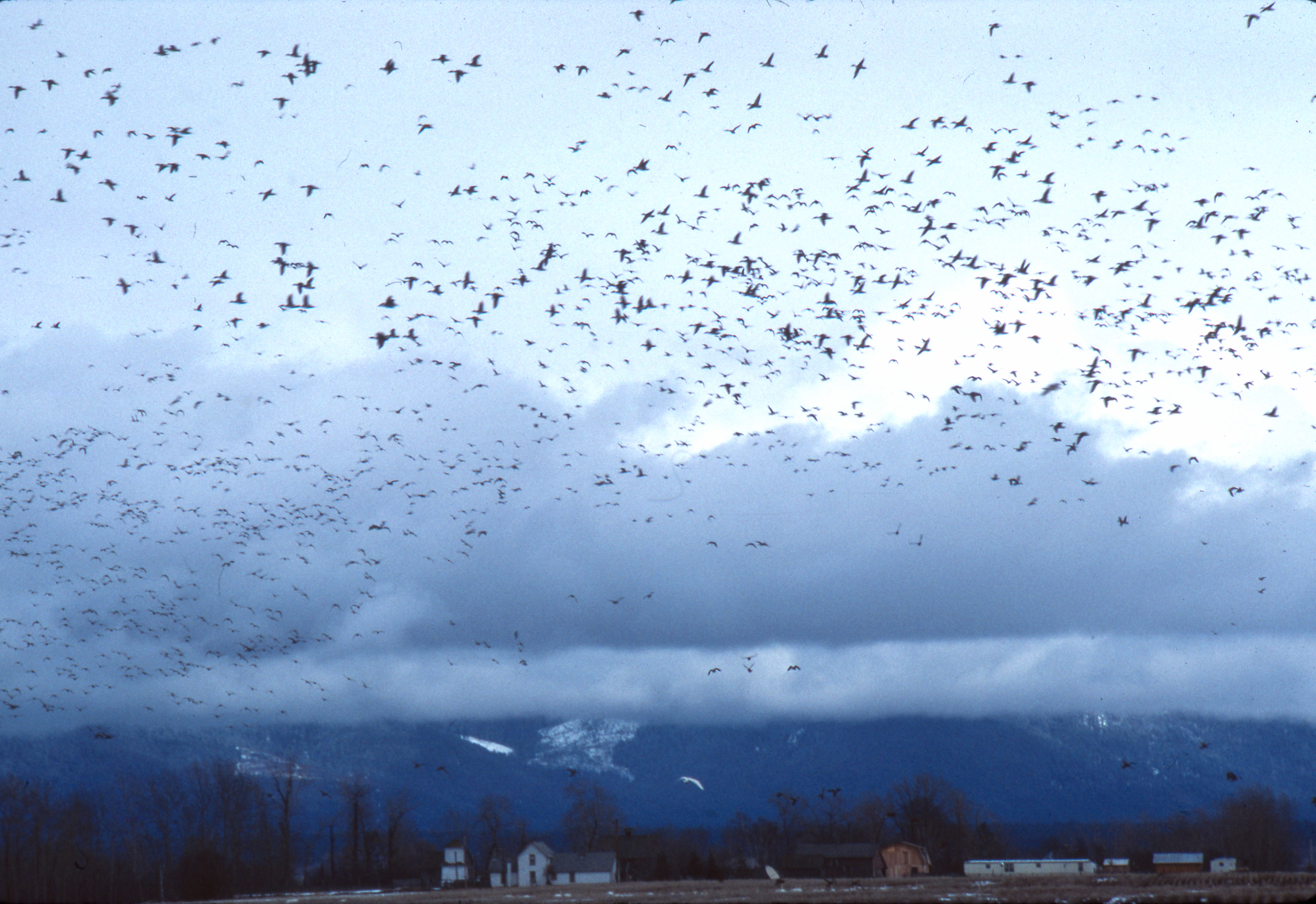 Birds_Lower Valley by Dan Casey