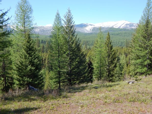 Another 78 acres of North Fork wildlife habitat conserved